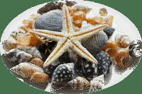 STARFISH DECO ÉTOILE DE MER