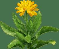yellow flower jaune fleur