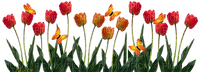 tulips border flowers spring tulipes bordure fleurs printemps