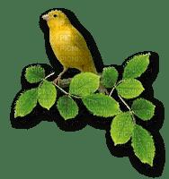 fågel-bird