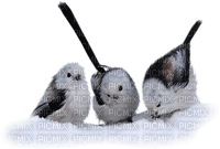 birds winter oiseaux hiver