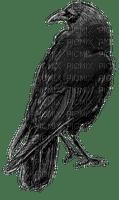 Raven TUBE by RAVENSONG 2018
