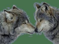 Wolf Eliana Angel