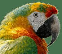 parrot papukaija lintu bird