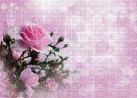 Bulle roses