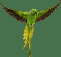 oiseau bird