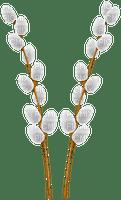 easter willow branche branche de saule de pâques