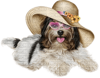 dog chien hund animal tube hunde dogs chiens animals ete summer sea mer beach plage strand fun gif anime animated animation sommer meer
