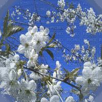 spring tree blossom printemps  arbre fleurs