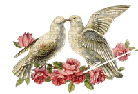 love doves colombe amour