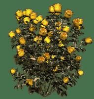 rose jaune.Cheyenne63