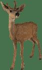 Kaz_Creations Animals Deer