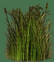 grass-erba-gräs-minou52
