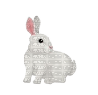 -rabbit-coniglio-lapin-Kaninchen-Кролик