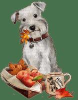 autumn dog / chien automne