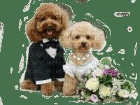 Dog wedding chien mariage