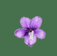 Flower Purple Orchid
