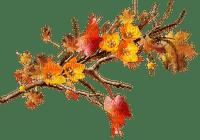 autumn tree branche automne arbre branch
