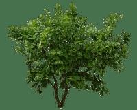 tree baum