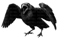 Kaz_Creations Halloween Deco  Birds Bird