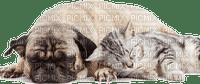 cat dog family