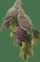 grapes bp