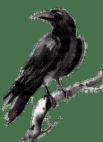 Crow.Raven.Corbeau.Cuervo.Victoriabea