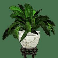 plant room chambre zimmer pflanze pot  spring printemps deco tube garden jardin garten plante