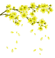 yellow flowering branch spring jaune printemps branche fleur