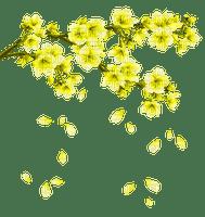 yellow flowering branch spring jaune printemps branche fleur