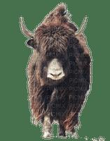 animals nancysaey