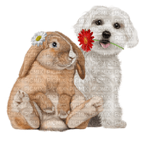 animal-dog-bunny-djur-hund-kanin