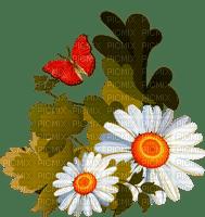 daisy flower-marguerite-fleur-papillon