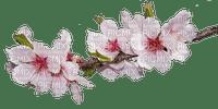 Frühlings-Ast
