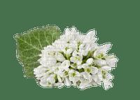 flower fleur blossom blumen white