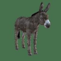 donkey, aasi