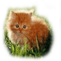 red hair baby cat grass chat bebe rouge herbe