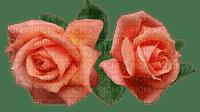 roses, ruusut, rose, ruusu