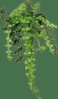 hanging plant, sunshine3