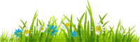 herbe fleur grass flowers border