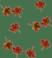 autumn  leaves  fallen_automne  feuille