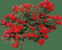 plants flowering - Nitsa P