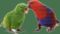 Kaz_Creations  Parrot Bird Birds