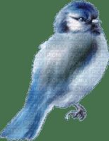 fågel--blå-  -bird--blue