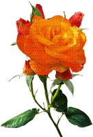 Rose   Bb2