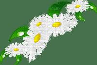 cadre,frame,camomilles,fleur,summer,tube, deko,scrapbooking Pelageya