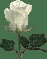 Trandafir 5