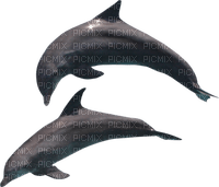 dauphin_dolphin_Blue DREAM 70