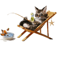 summer cat beach chair chat êtê