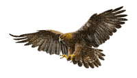 eagle adler bird western wild west  occidental Native American Américain de naissance        Amerikanischer Ureinwohner wilde westen ouest sauvage  tube  indian indianer indien
